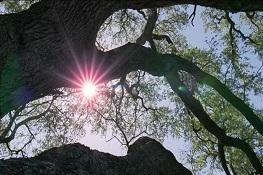 Tree of Life 10