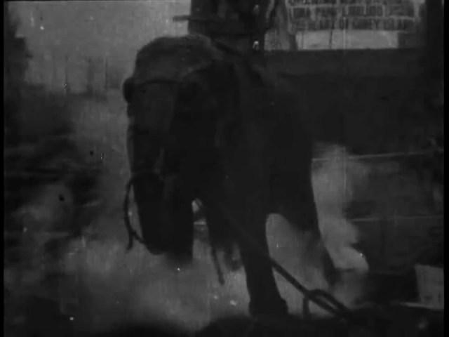 Electrocuting an Elephant (1903) - Thomas A Edison
