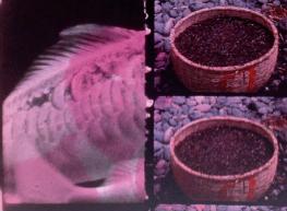 cecile-fonaine-principal
